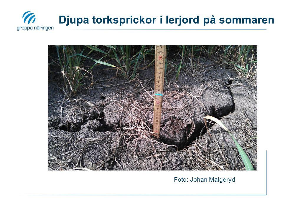 Djupa torksprickor i lerjord på sommaren Foto: Johan Malgeryd