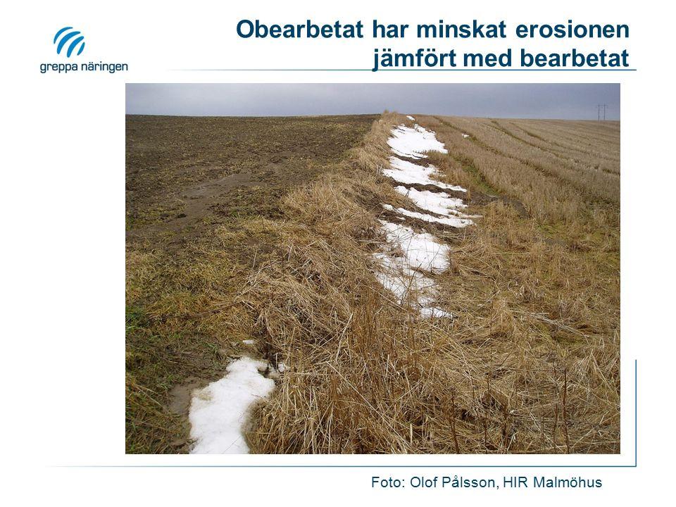 Obearbetat har minskat erosionen jämfört med bearbetat Foto: Olof Pålsson, HIR Malmöhus