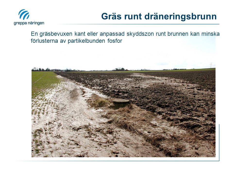 En gräsbevuxen kant eller anpassad skyddszon runt brunnen kan minska förlusterna av partikelbunden fosfor Gräs runt dräneringsbrunn
