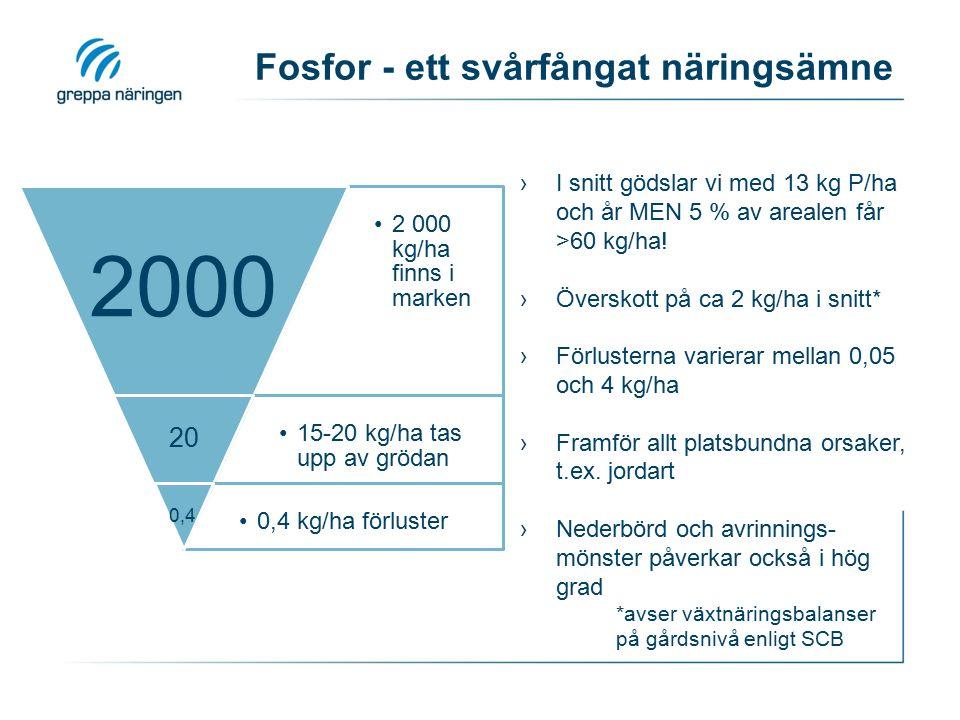 Fosfor - ett svårfångat näringsämne 2 000 kg/ha finns i marken 2000 15-20 kg/ha tas upp av grödan 20 0,4 kg/ha förluster 0,4 ›I snitt gödslar vi med 1
