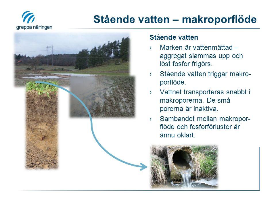 Stående vatten – makroporflöde Stående vatten ›Marken är vattenmättad – aggregat slammas upp och löst fosfor frigörs. ›Stående vatten triggar makro- p