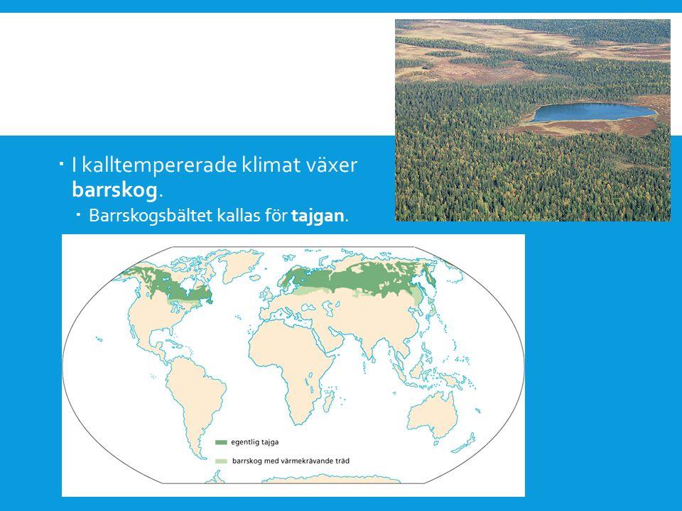  I kalltempererade klimat växer barrskog.  Barrskogsbältet kallas för tajgan.