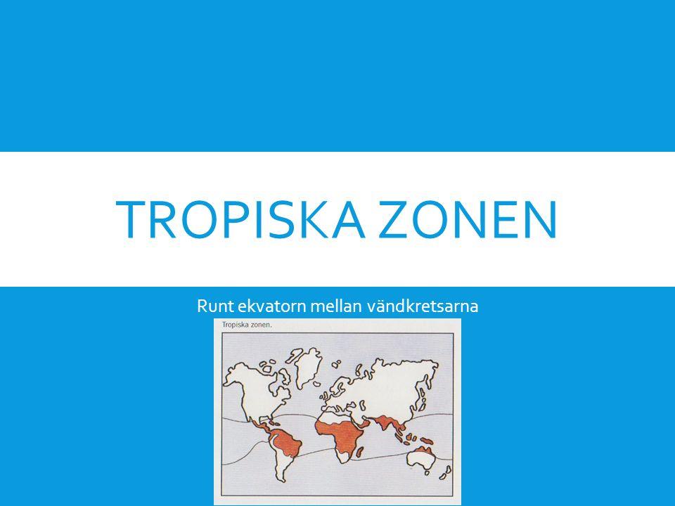 TROPISKA ZONEN Runt ekvatorn mellan vändkretsarna
