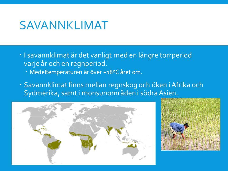 SAVANNKLIMAT  I savannklimat är det vanligt med en längre torrperiod varje år och en regnperiod.  Medeltemperaturen är över +18ºC året om.  Savannk