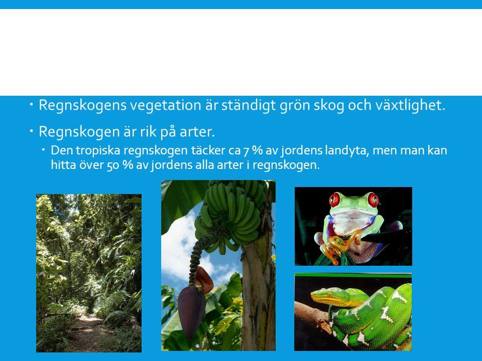  Regnskogens vegetation är ständigt grön skog och växtlighet.  Regnskogen är rik på arter.  Den tropiska regnskogen täcker ca 7 % av jordens landyt