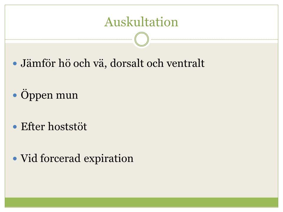 Auskultation Jämför hö och vä, dorsalt och ventralt Öppen mun Efter hoststöt Vid forcerad expiration