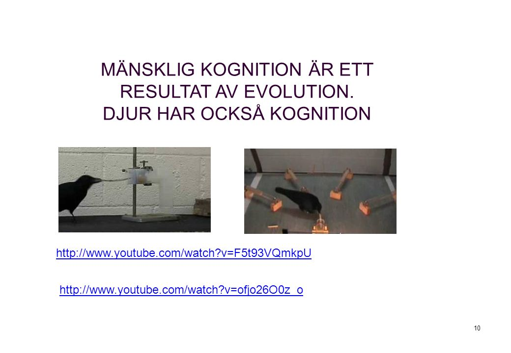10 http://www.youtube.com/watch?v=F5t93VQmkpU MÄNSKLIG KOGNITION ÄR ETT RESULTAT AV EVOLUTION.