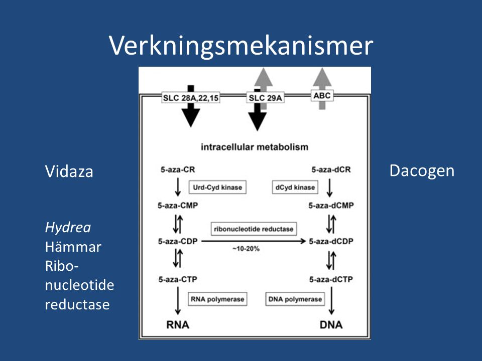 Verkningsmekanismer Vidaza Hydrea Hämmar Ribo- nucleotide reductase Dacogen
