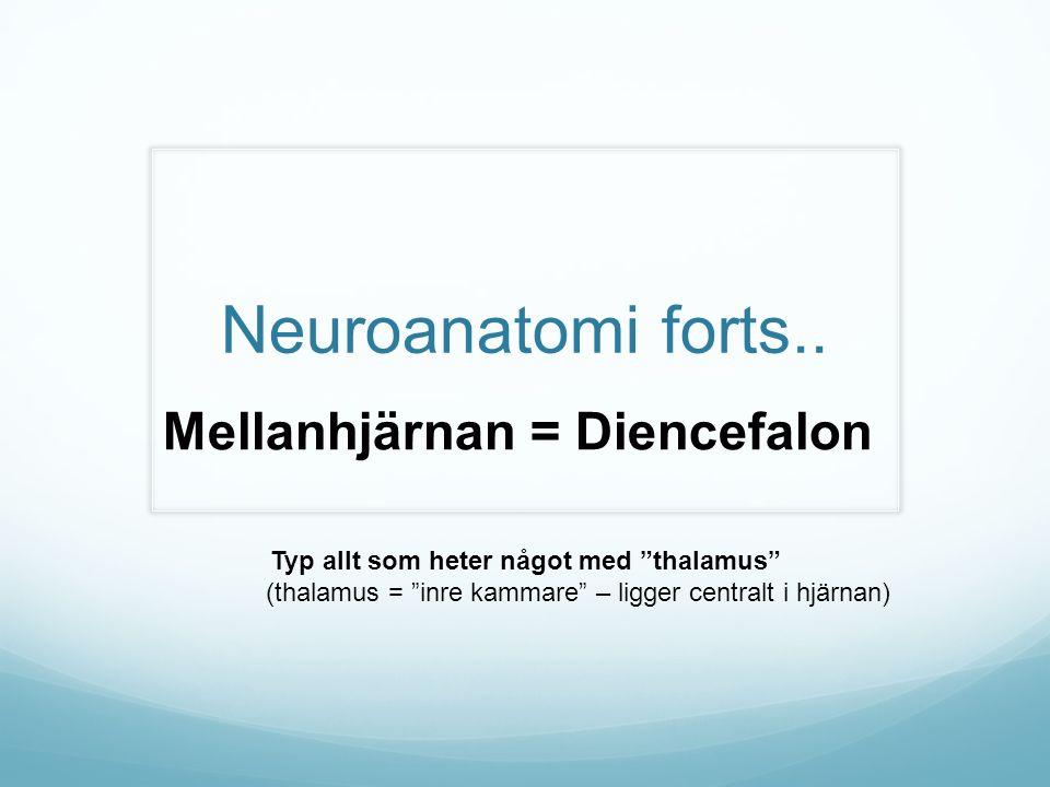 """Neuroanatomi forts.. Mellanhjärnan = Diencefalon Typ allt som heter något med """"thalamus"""" (thalamus = """"inre kammare"""" – ligger centralt i hjärnan)"""