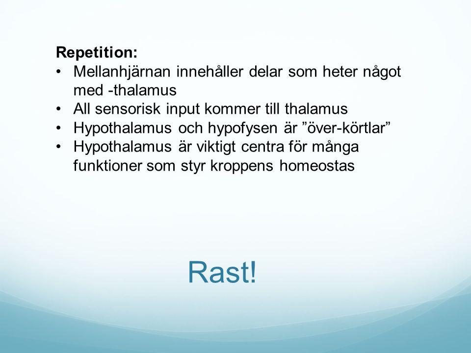 Rast! Repetition: Mellanhjärnan innehåller delar som heter något med -thalamus All sensorisk input kommer till thalamus Hypothalamus och hypofysen är