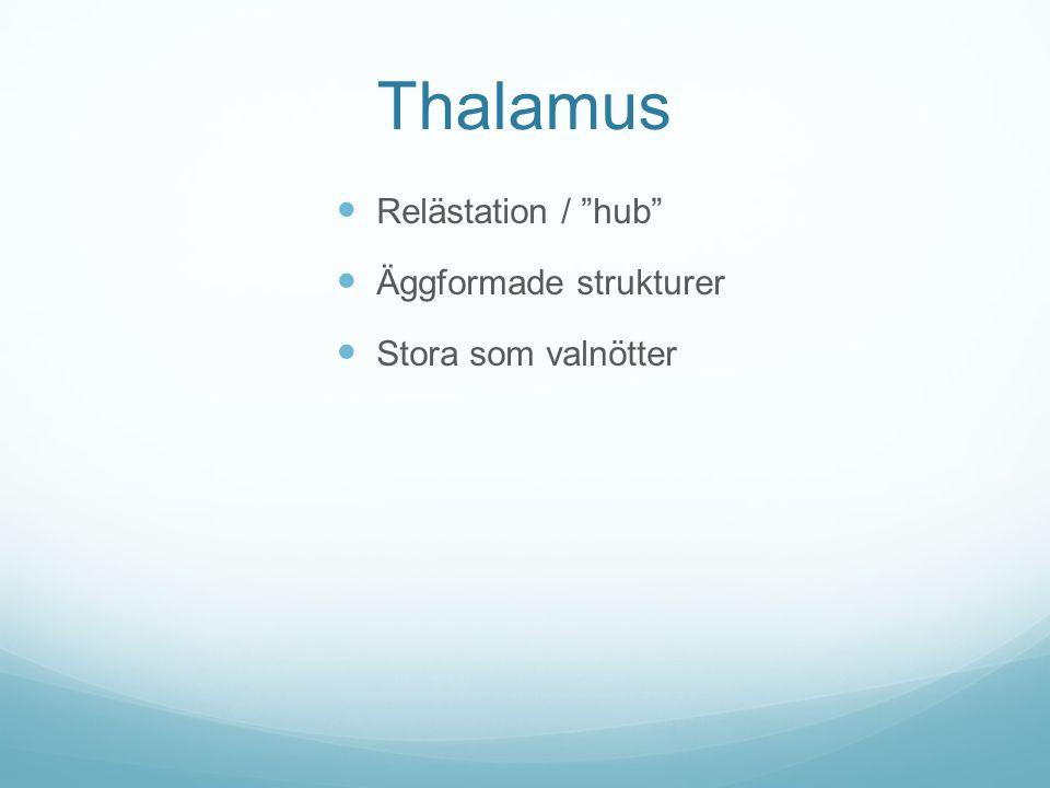 """Thalamus Relästation / """"hub"""" Äggformade strukturer Stora som valnötter"""