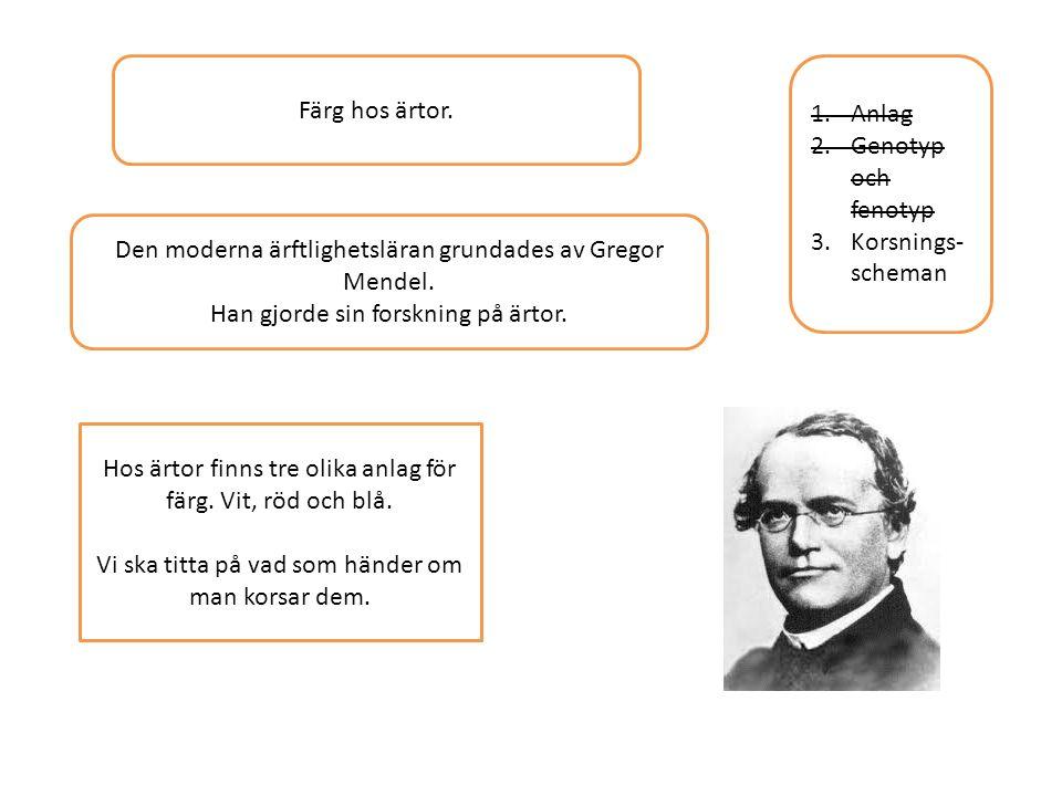 1.Anlag 2.Genotyp och fenotyp 3.Korsnings- scheman Färg hos ärtor. Den moderna ärftlighetsläran grundades av Gregor Mendel. Han gjorde sin forskning p