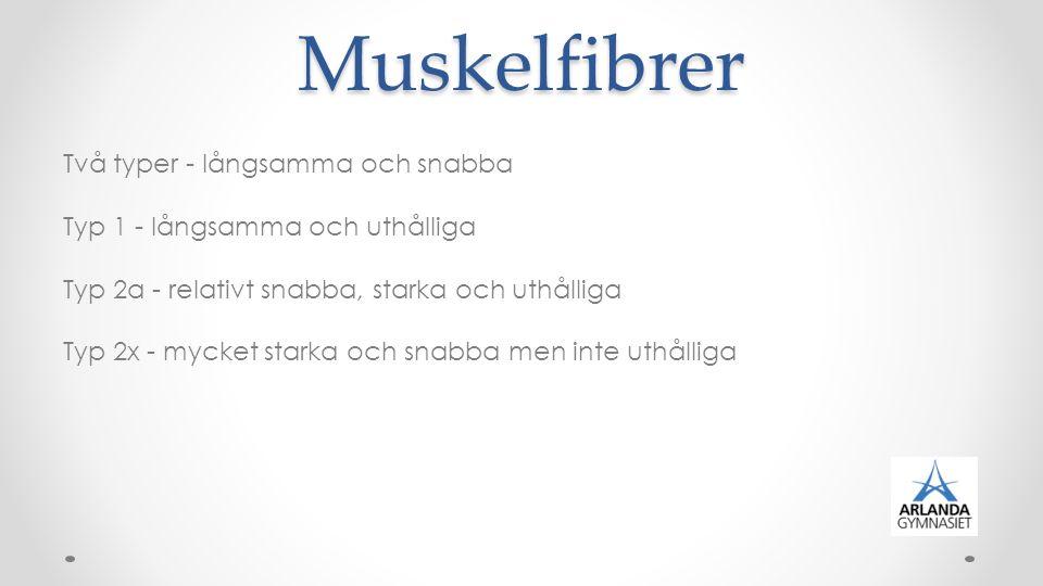 Muskelfibrer Två typer - långsamma och snabba Typ 1 - långsamma och uthålliga Typ 2a - relativt snabba, starka och uthålliga Typ 2x - mycket starka och snabba men inte uthålliga