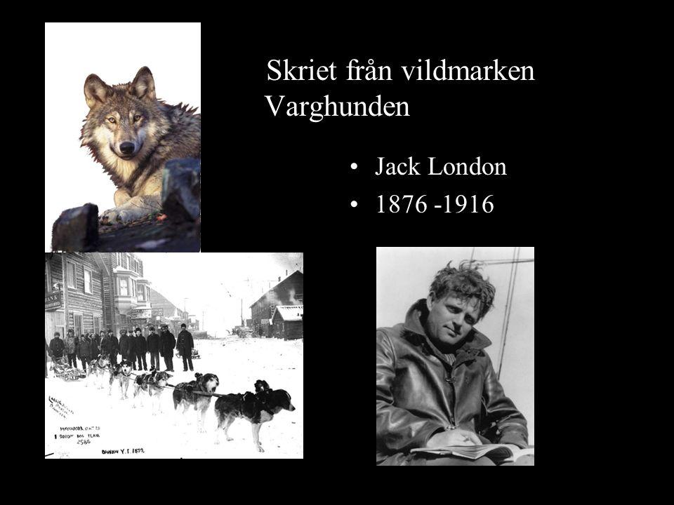 Skriet från vildmarken Varghunden Jack London 1876 -1916