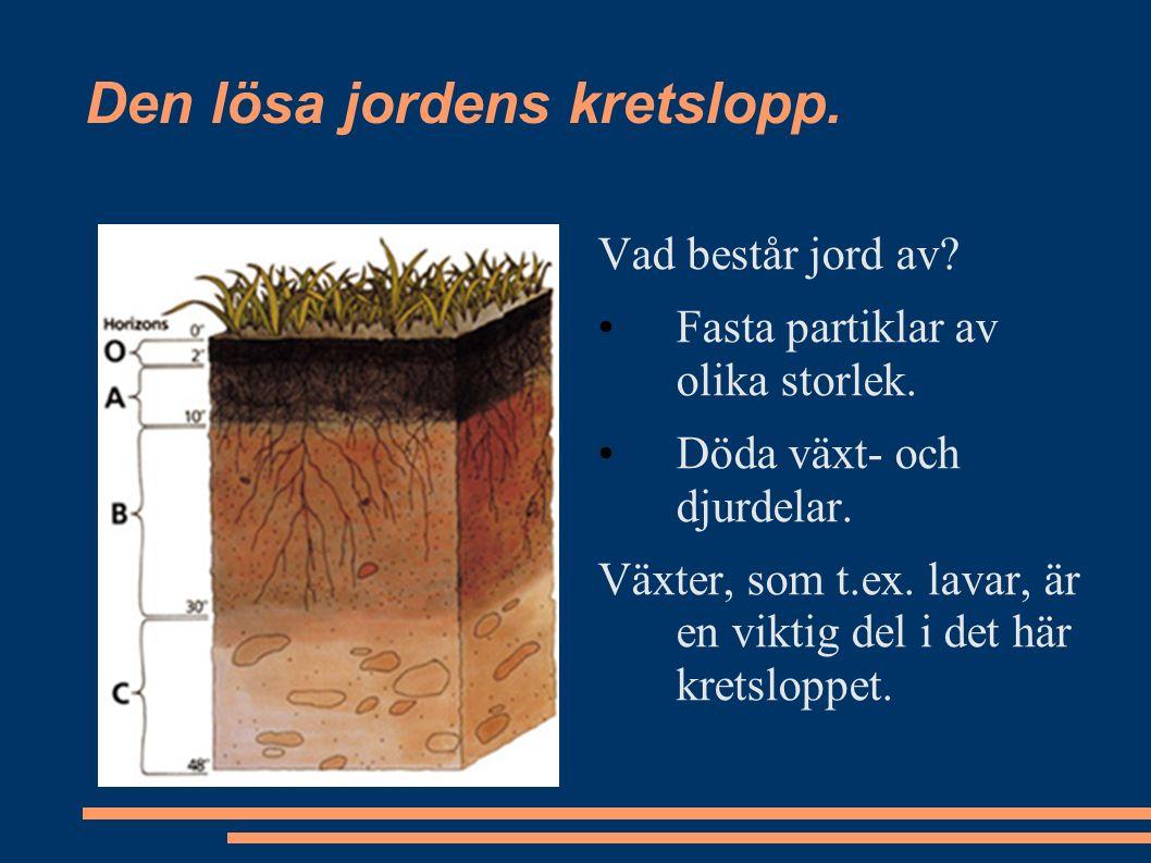 Den lösa jordens kretslopp. Vad består jord av? Fasta partiklar av olika storlek. Döda växt- och djurdelar. Växter, som t.ex. lavar, är en viktig del