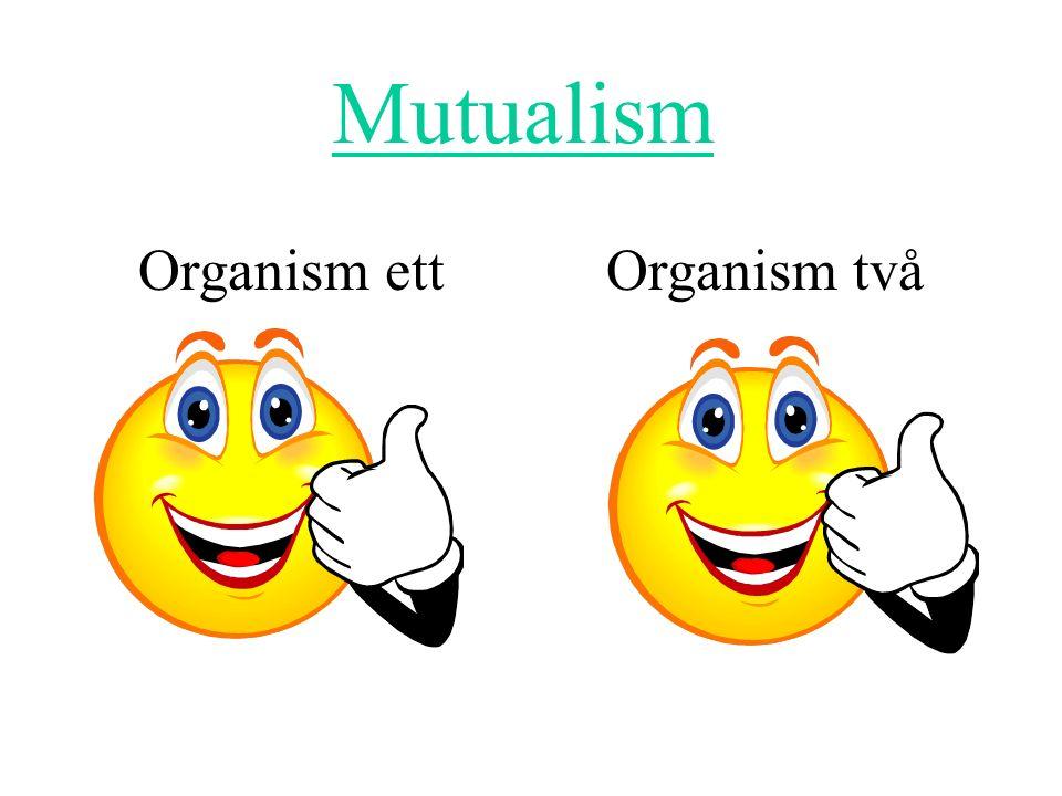 Mutualism Organism ett Organism två