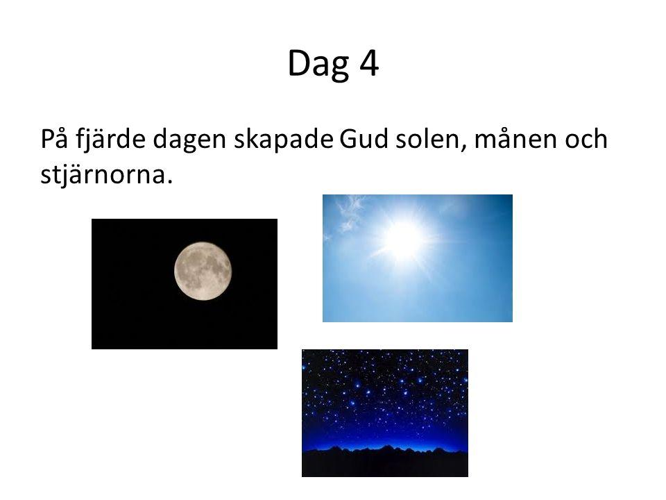 Dag 5 Den femte dagen skapade Gud fiskar i havet och fåglar på land.