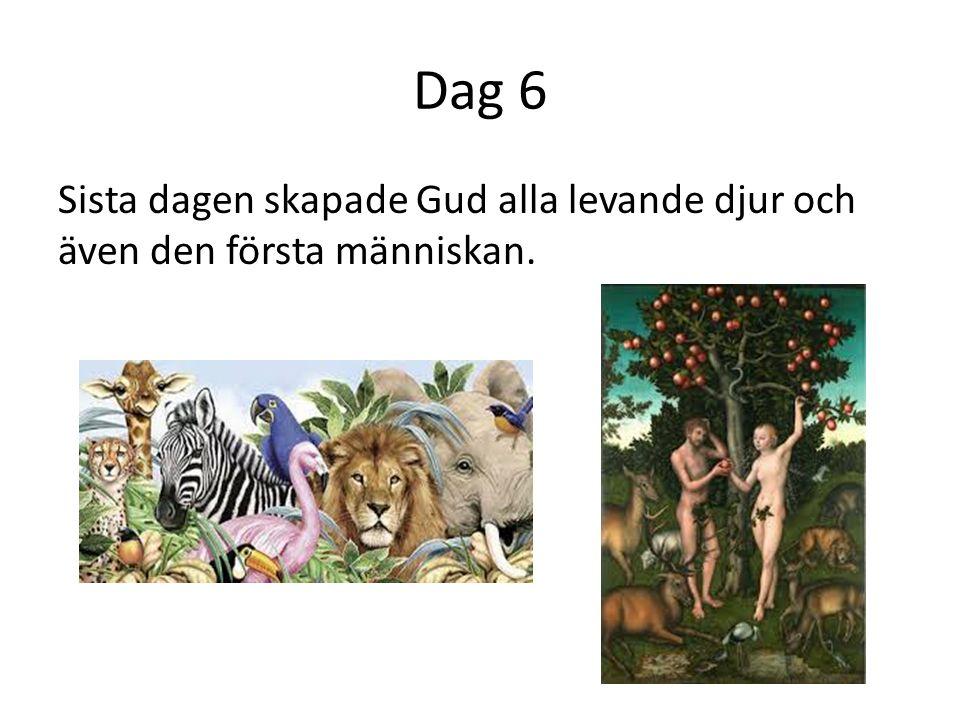 Dag 6 Sista dagen skapade Gud alla levande djur och även den första människan.