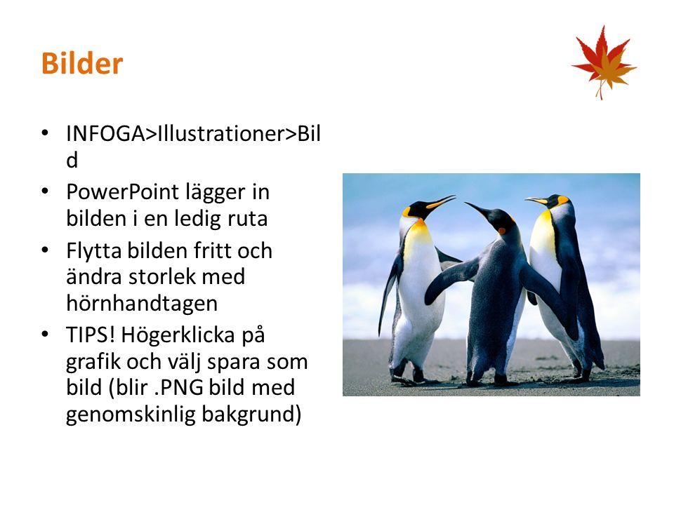Bilder INFOGA>Illustrationer>Bil d PowerPoint lägger in bilden i en ledig ruta Flytta bilden fritt och ändra storlek med hörnhandtagen TIPS.