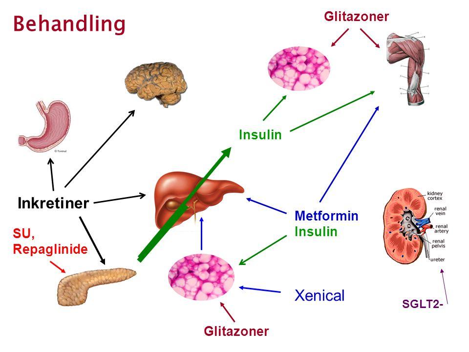 Behandling Metformin Insulin Glitazoner SU, Repaglinide Inkretiner Xenical SGLT2-
