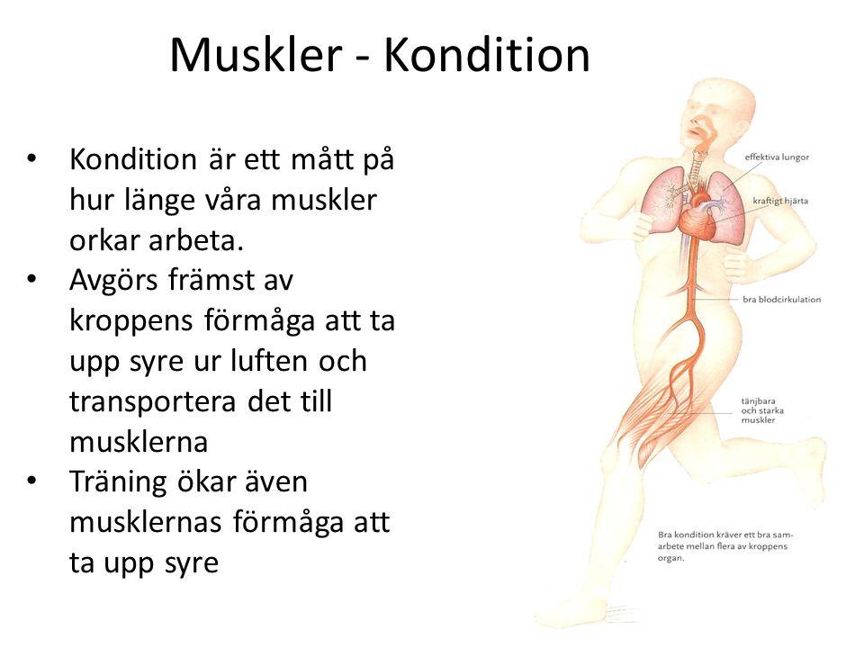 Muskler - Kondition Kondition är ett mått på hur länge våra muskler orkar arbeta. Avgörs främst av kroppens förmåga att ta upp syre ur luften och tran