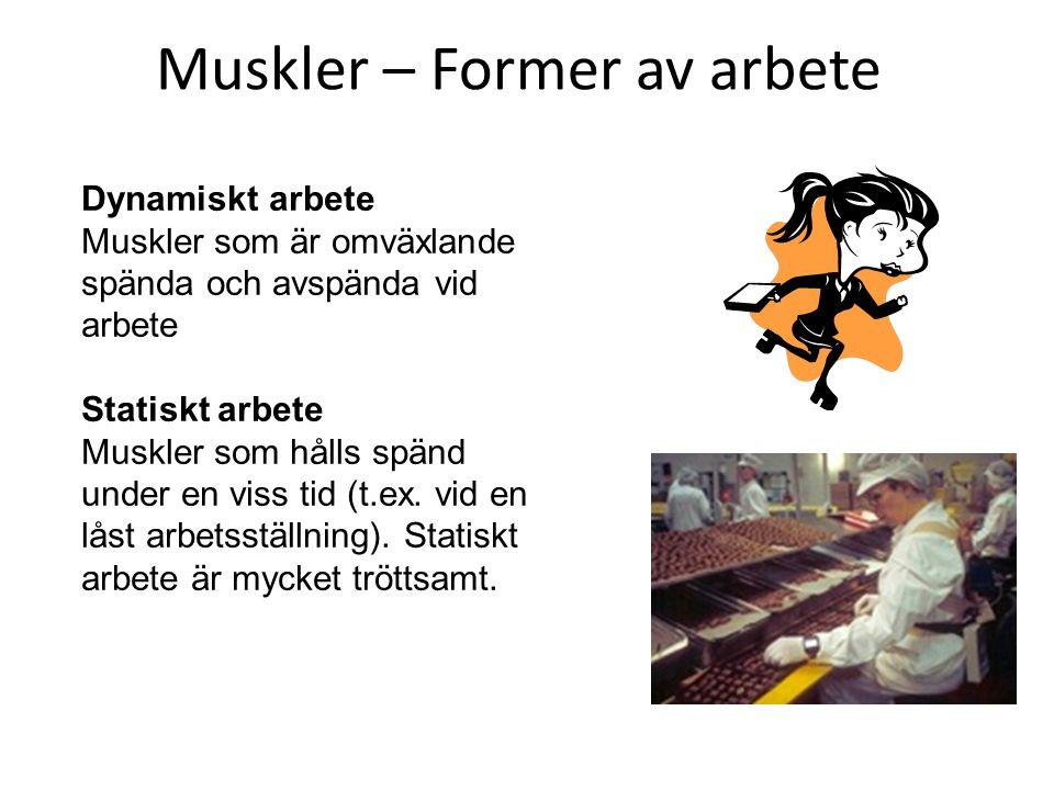 Muskler – Former av arbete Dynamiskt arbete Muskler som är omväxlande spända och avspända vid arbete Statiskt arbete Muskler som hålls spänd under en