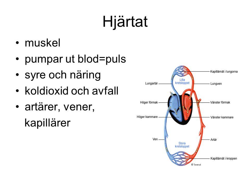 Hjärtat muskel pumpar ut blod=puls syre och näring koldioxid och avfall artärer, vener, kapillärer