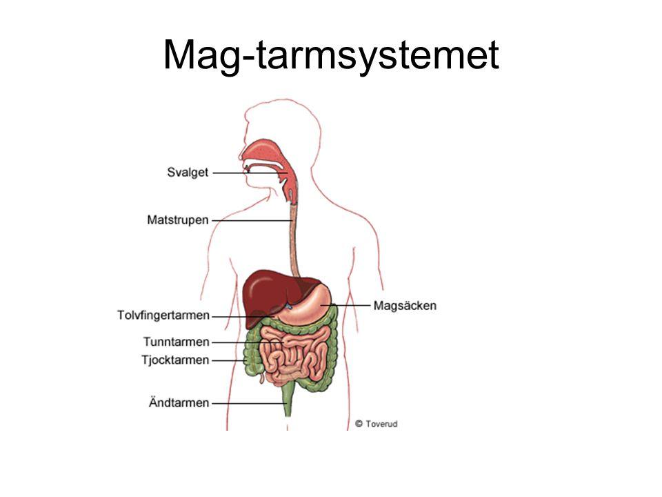 Mag-tarmsystemet