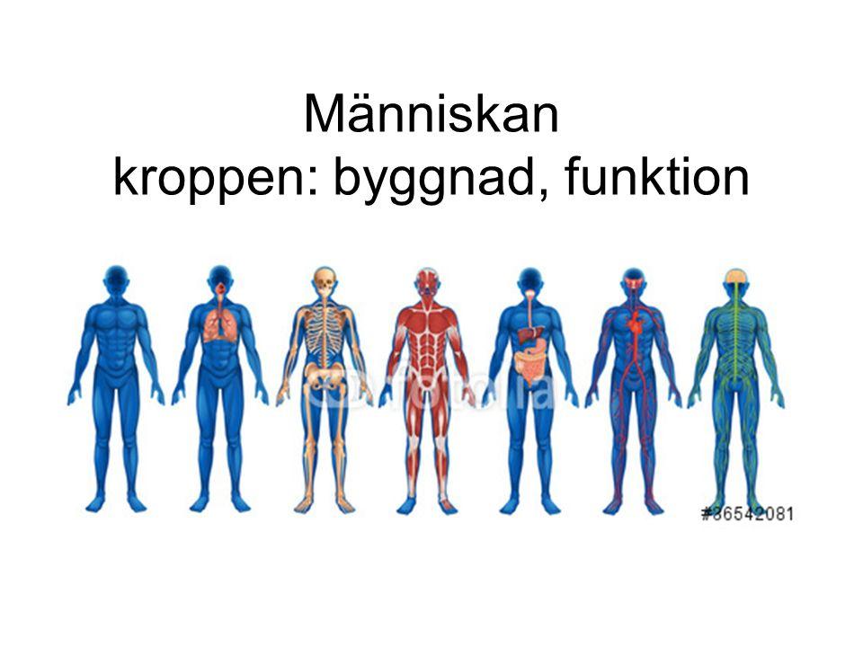 Människan kroppen: byggnad, funktion
