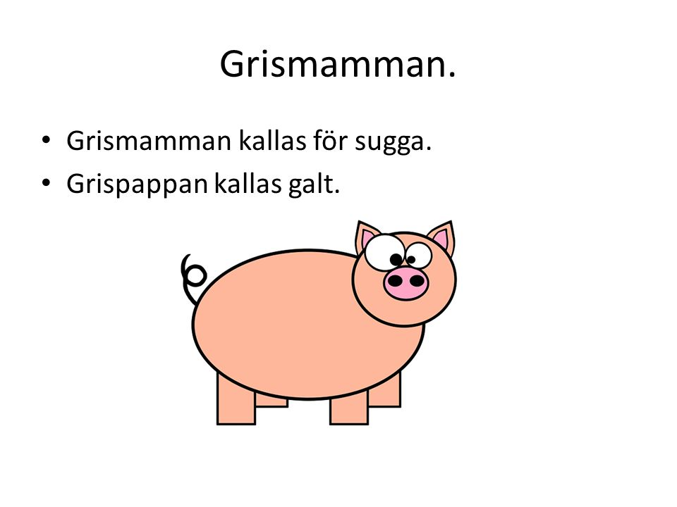 Knorren. Man brukar säga att en gris som mår bra har knorr på svansen.