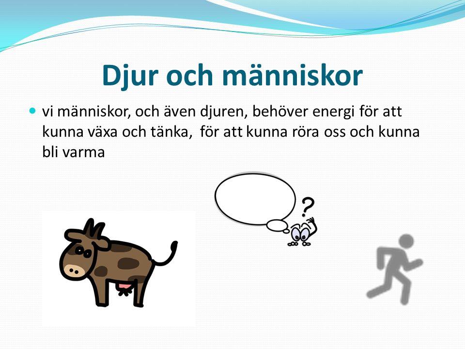 Djur och människor vi människor, och även djuren, behöver energi för att kunna växa och tänka, för att kunna röra oss och kunna bli varma