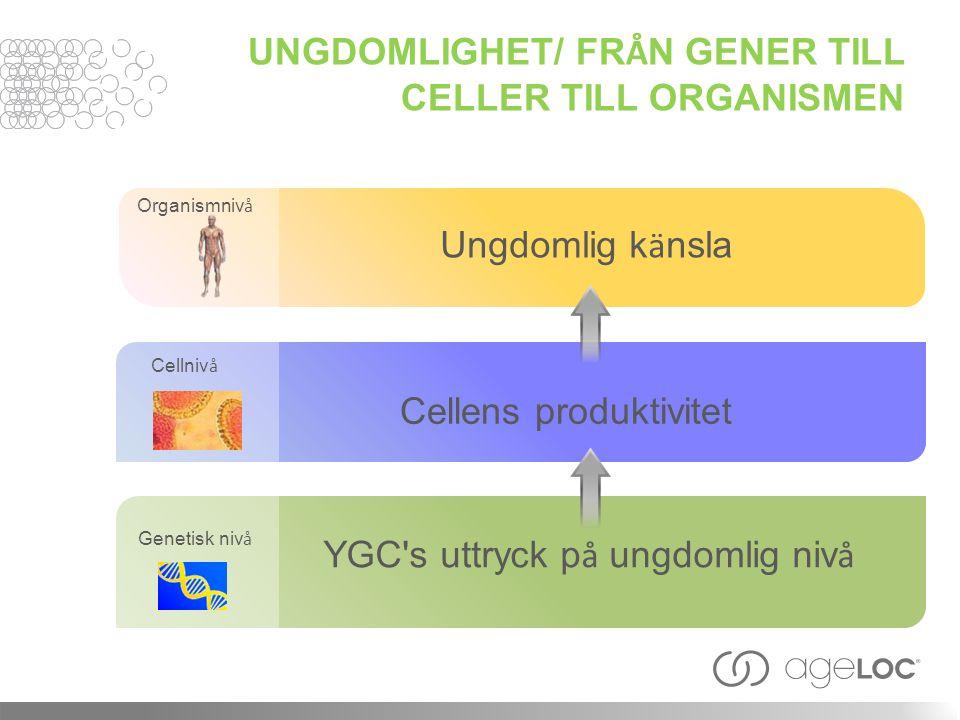 Organismniv å Genetisk niv å Cellniv å Ungdomlig k ä nsla Cellens produktivitet YGC's uttryck p å ungdomlig niv å UNGDOMLIGHET/ FR Å N GENER TILL CELL