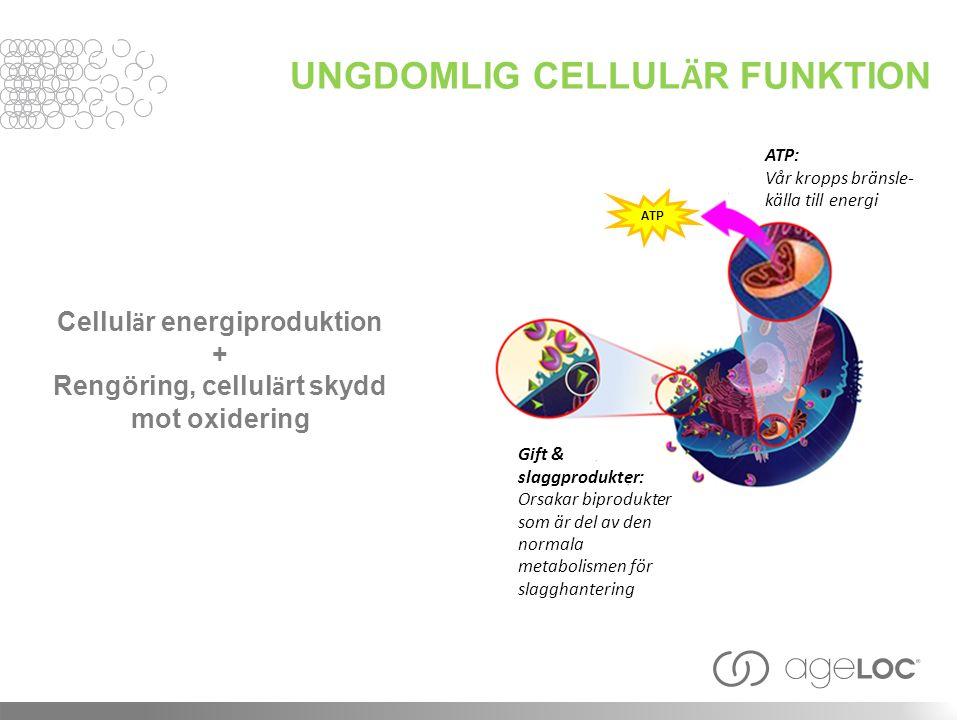 UNGDOMLIG CELLUL Ä R FUNKTION Cellul ä r energiproduktion + Rengöring, cellul ä rt skydd mot oxidering ATP Gift & slaggprodukter: Orsakar biprodukter som är del av den normala metabolismen för slagghantering ATP: Vår kropps bränsle- källa till energi