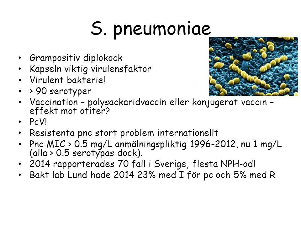 S. pneumoniae Grampositiv diplokock Kapseln viktig virulensfaktor Virulent bakterie! > 90 serotyper Vaccination – polysackaridvaccin eller konjugerat