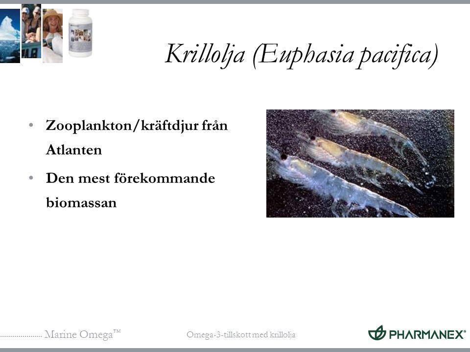 Marine Omega ™ Omega-3-tillskott med krillolja Krillolja (Euphasia pacifica) Zooplankton/kräftdjur från Atlanten Den mest förekommande biomassan