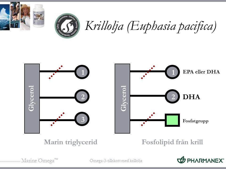 Marine Omega ™ Omega-3-tillskott med krillolja 1 2 3 DHA Marin triglyceridFosfolipid från krill Fosfatgrupp Glycerol 1 2 EPA eller DHA Krillolja (Euph