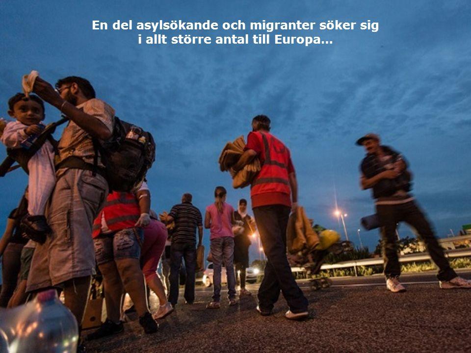 En del asylsökande och migranter söker sig i allt större antal till Europa…