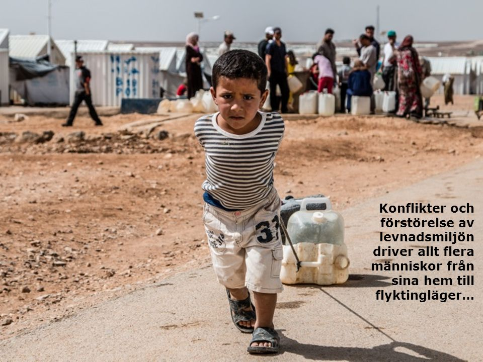 Konflikter och förstörelse av levnadsmiljön driver allt flera människor från sina hem till flyktingläger…