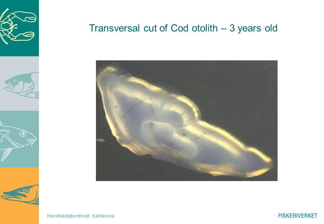 Havsfiskelaboratoriet, Karlskrona Transversal cut of Cod otolith – 3 years old