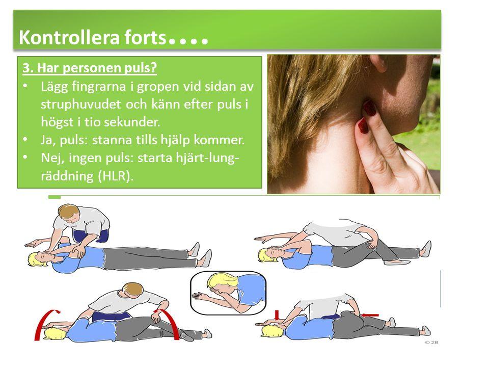 Kontrollera forts …. 3. Har personen puls? Lägg fingrarna i gropen vid sidan av struphuvudet och känn efter puls i högst i tio sekunder. Ja, puls: sta