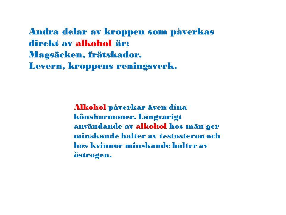 Andra delar av kroppen som påverkas direkt av alkohol är: Magsäcken, frätskador. Levern, kroppens reningsverk. Alkohol påverkar även dina könshormoner