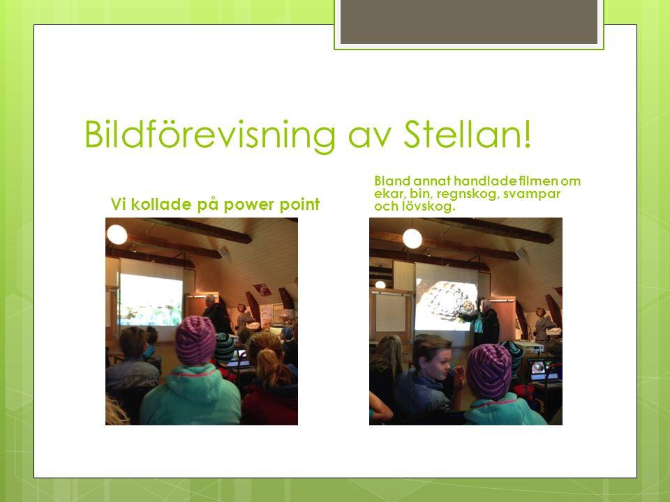 Bildförevisning av Stellan.