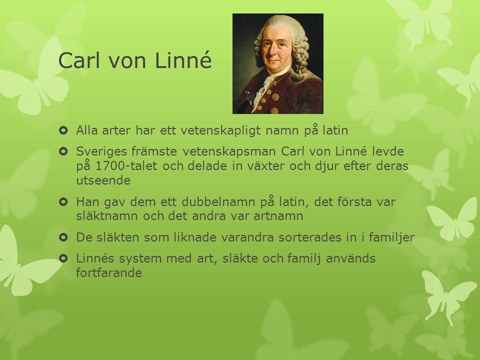 Carl von Linné  Alla arter har ett vetenskapligt namn på latin  Sveriges främste vetenskapsman Carl von Linné levde på 1700-talet och delade in växter och djur efter deras utseende  Han gav dem ett dubbelnamn på latin, det första var släktnamn och det andra var artnamn  De släkten som liknade varandra sorterades in i familjer  Linnés system med art, släkte och familj används fortfarande