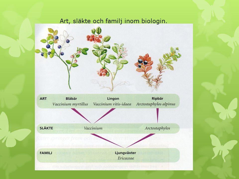 Art, släkte och familj inom biologin.