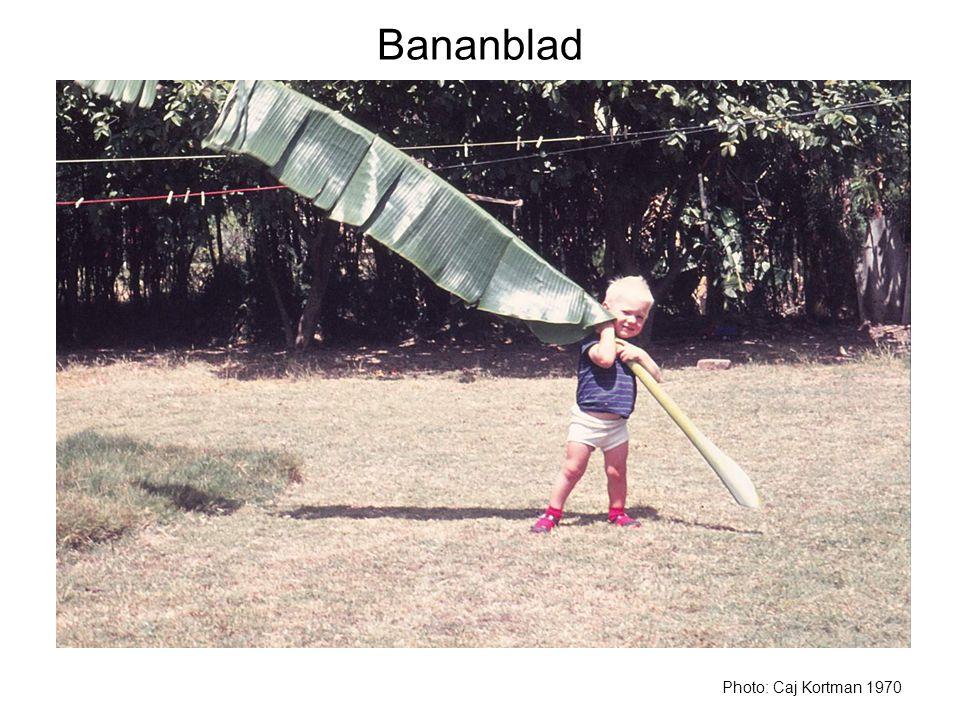 Bananblad Photo: Caj Kortman 1970