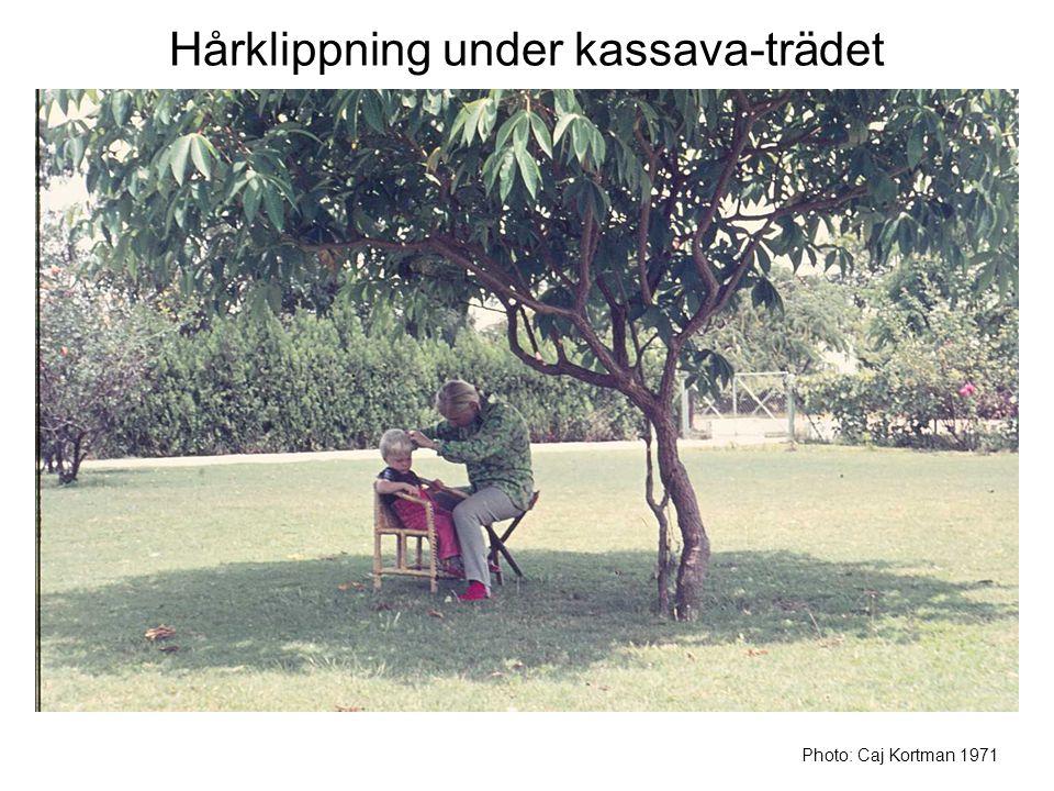 Hårklippning under kassava-trädet Photo: Caj Kortman 1971