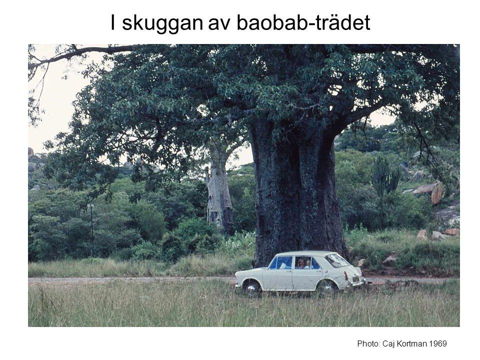 I skuggan av baobab-trädet Photo: Caj Kortman 1969