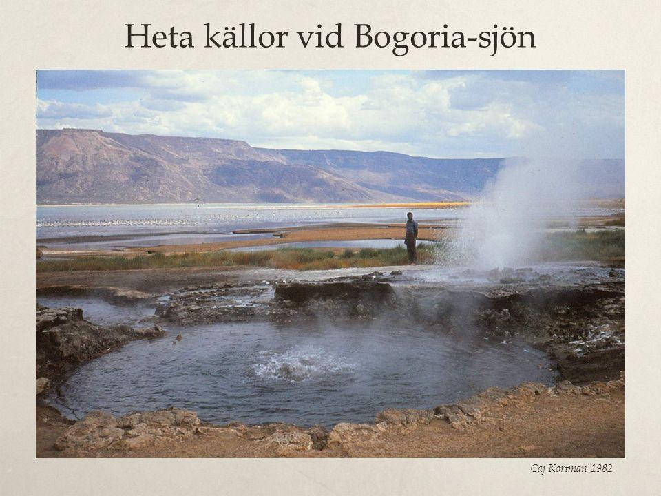 Heta källor vid Bogoria-sjön Caj Kortman 1982