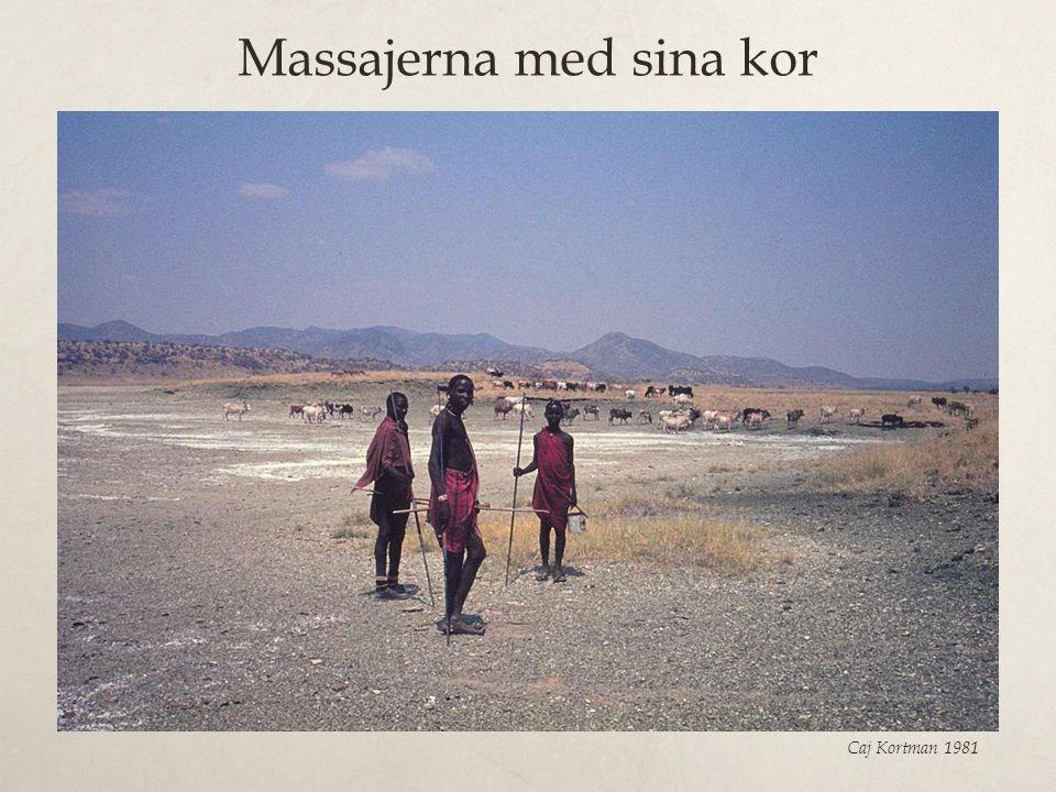 Massajerna med sina kor Caj Kortman 1981