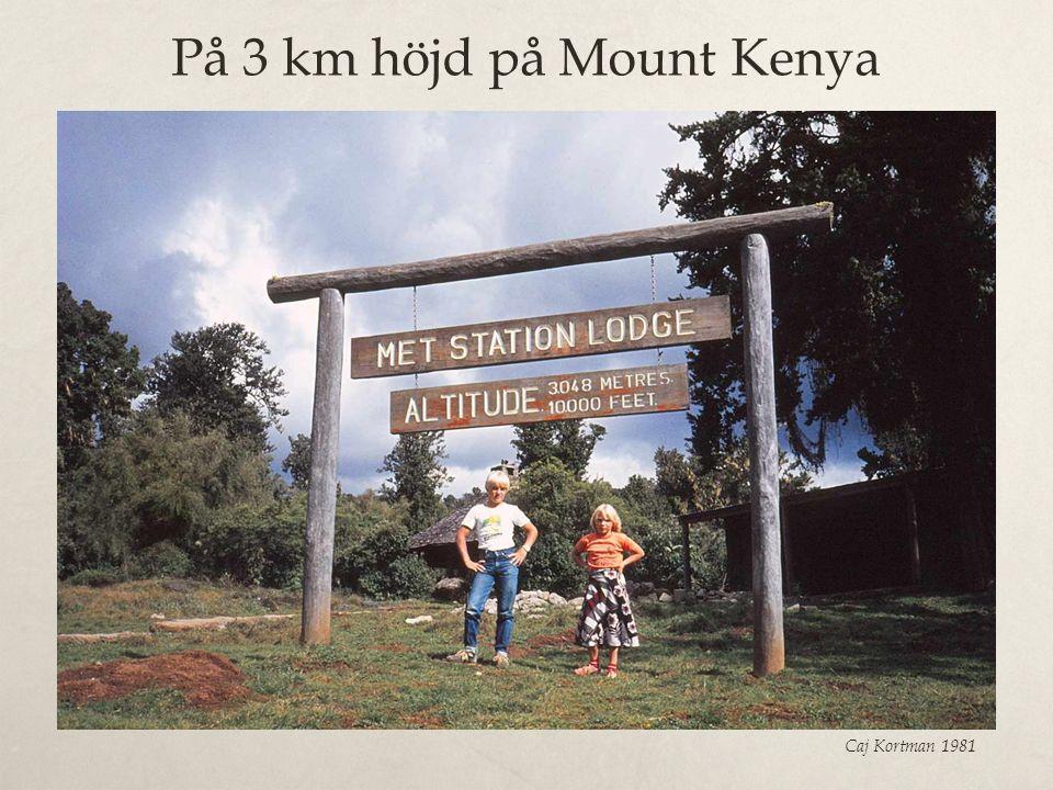 På 3 km höjd på Mount Kenya Caj Kortman 1981